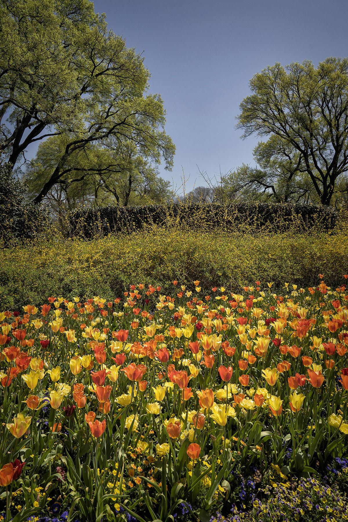 Dallas Botanical Gardens – ROAMING 365
